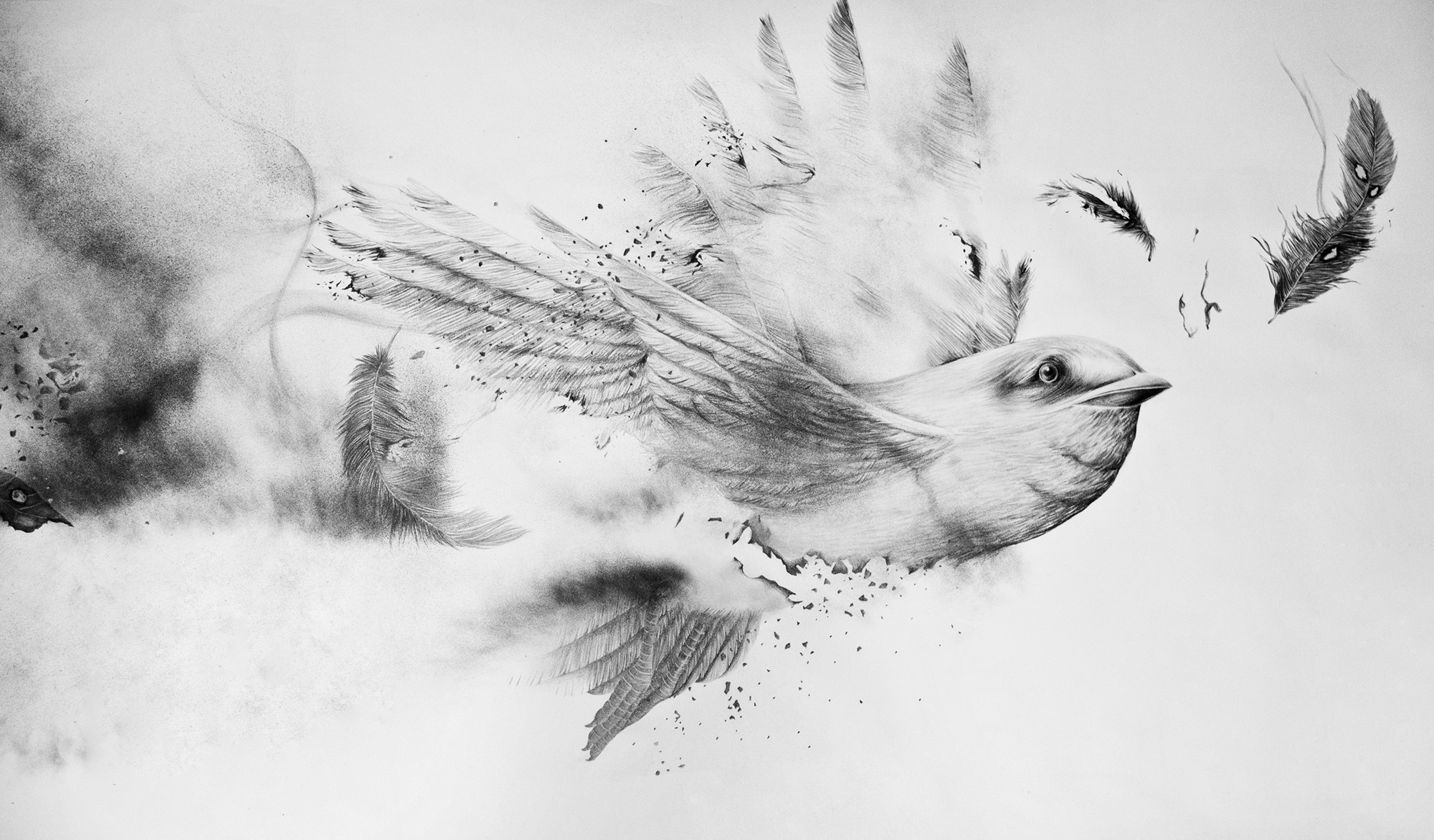 Footstep of destroyer-bird