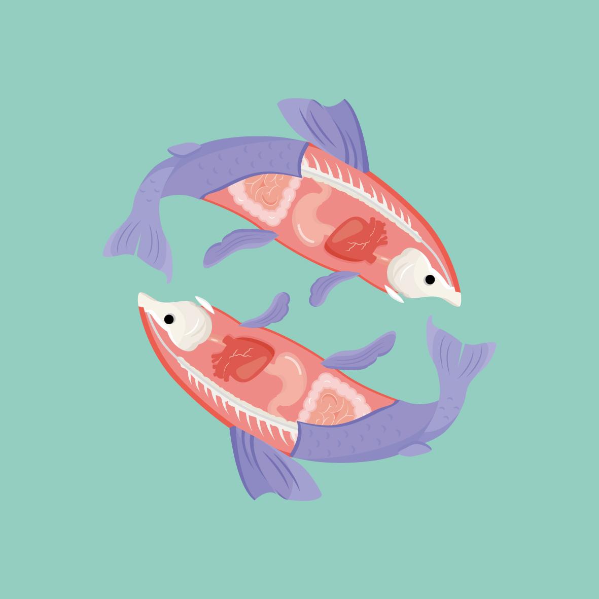 smells like fish spirit-01