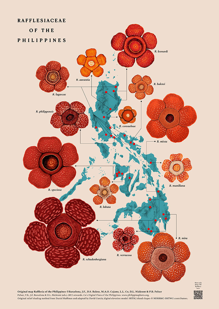 GirlsclubAsia-Designer-Illustrator-Raxenne-Maniquiz-Philippines-2019-PH-Rafflesiaceae-Map