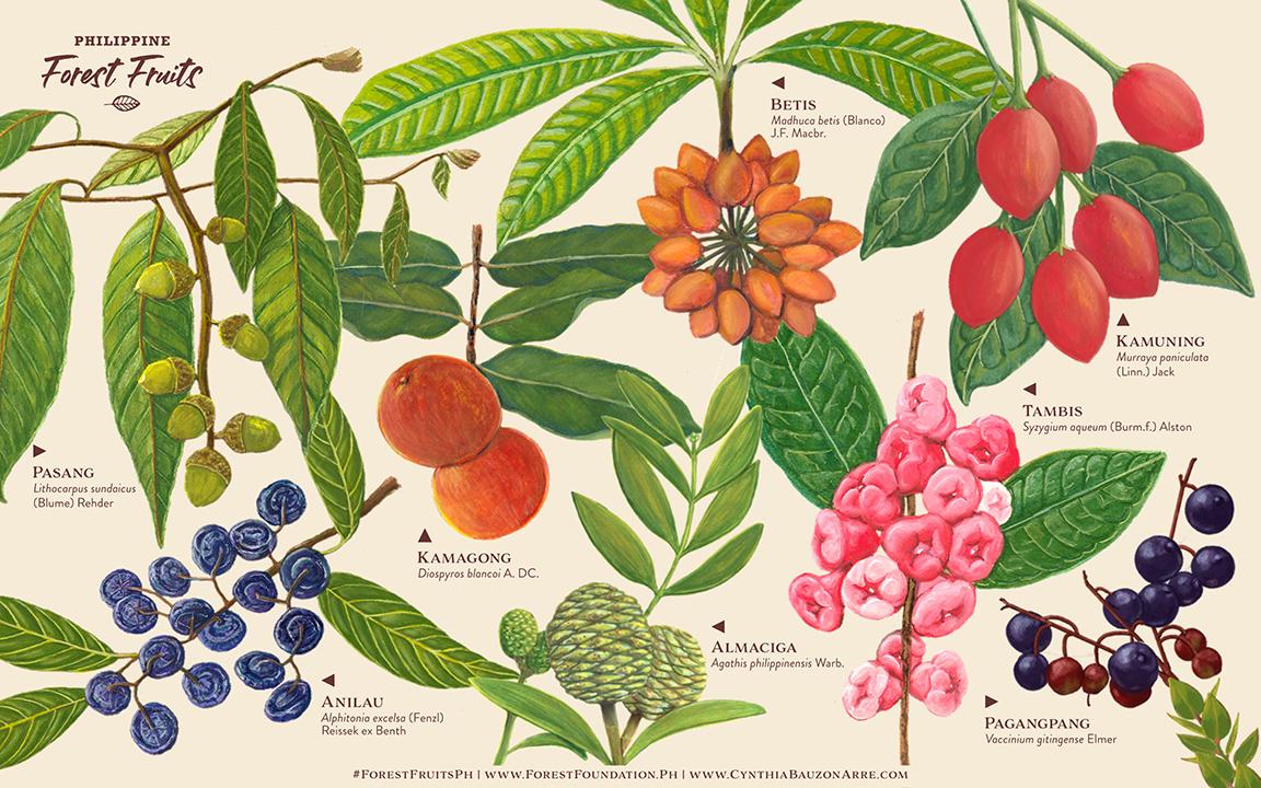 Girlsclub-Asia-Cynthia-Bauzon-Arre-Forest-Fruits-desktop-wallpaper