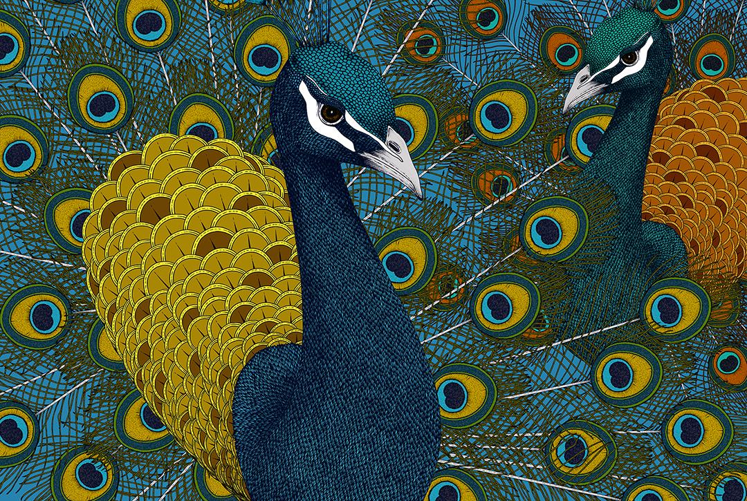 GirlsclubAsia-Artist-Suthipa Kamyam-AW_01_01_Peacock